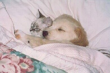 cat and dog in bed